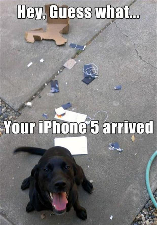 dog chewed up your cell phone
