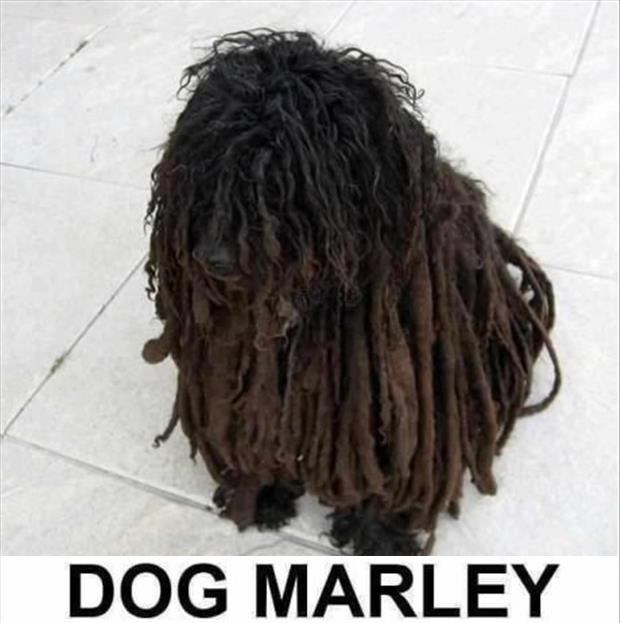 dog marley funny dogs