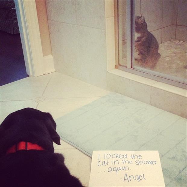 dog shaming locks cat in the shower