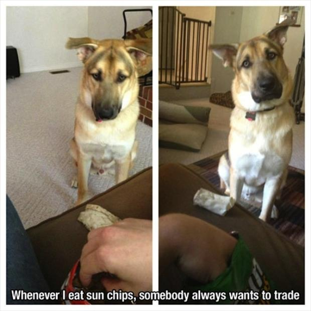 dog wants to trade snacks