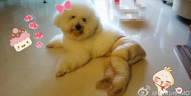 dogs wearing pantyhose funny animal pictures (10)