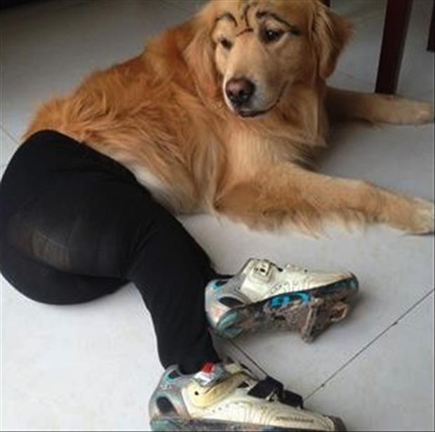 dogs wearing pantyhose meme (10)