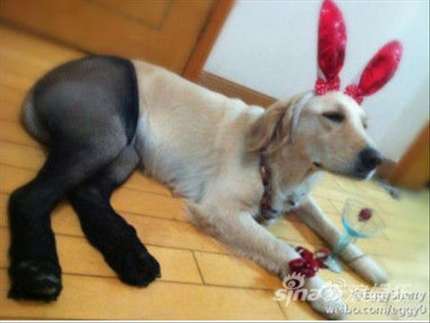 dogs wearing pantyhose meme (19)