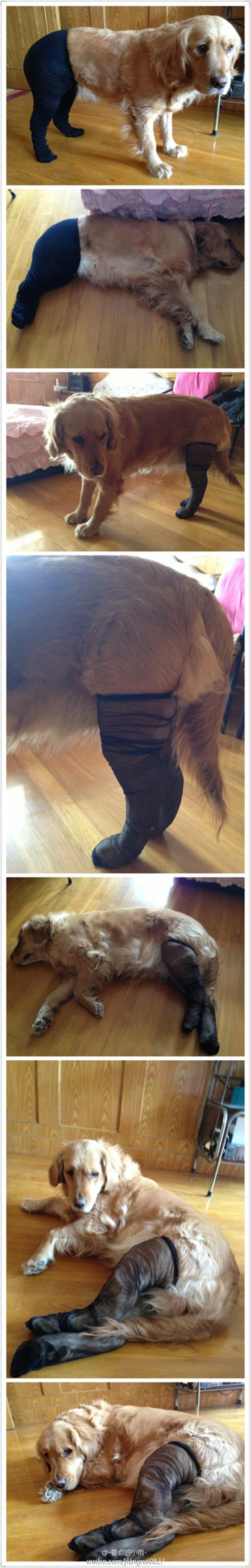 dogs wearing pantyhose meme (4)