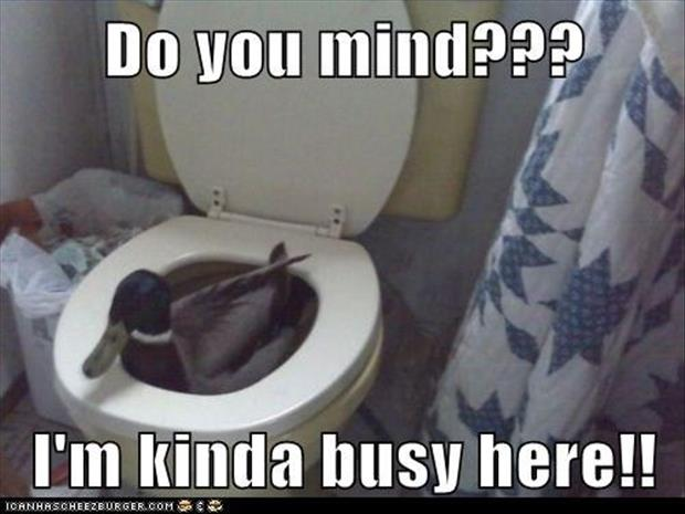 duck in the toilet