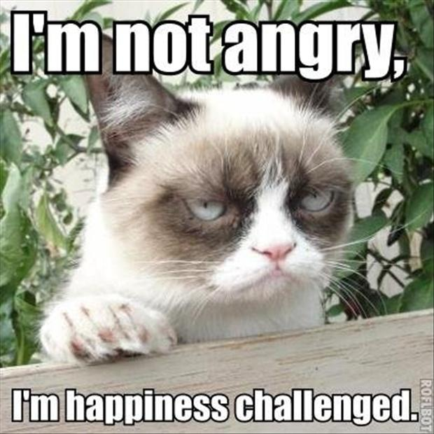 angry cat meme no - photo #21