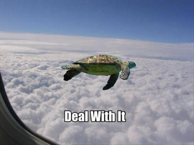 flying turtles deal with it