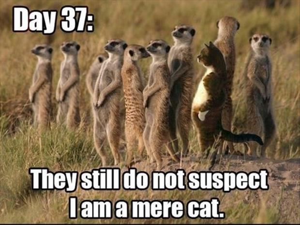 funny animal pictures, day 37 and they don't suspect anything