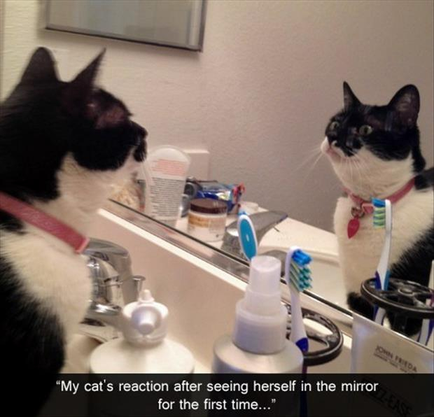 funny cat looks in the mirror
