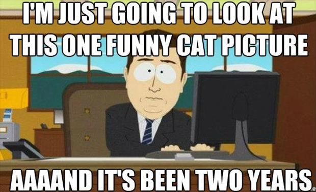 funny cat pictures on the internet