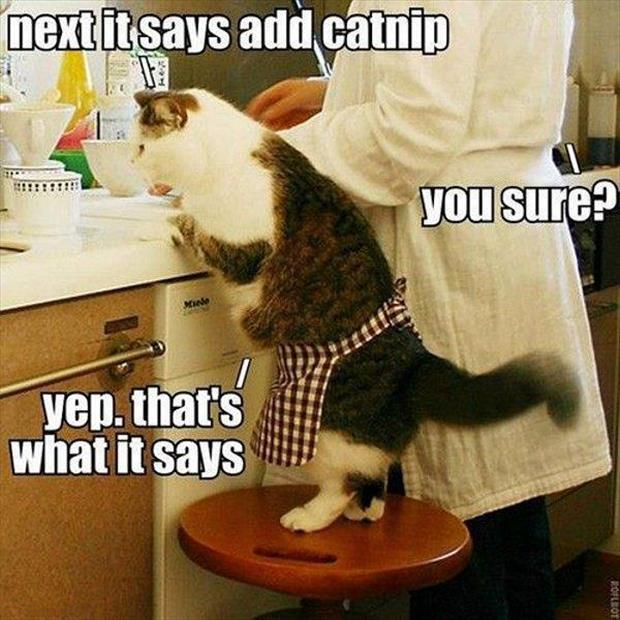 funny cooking with catnip