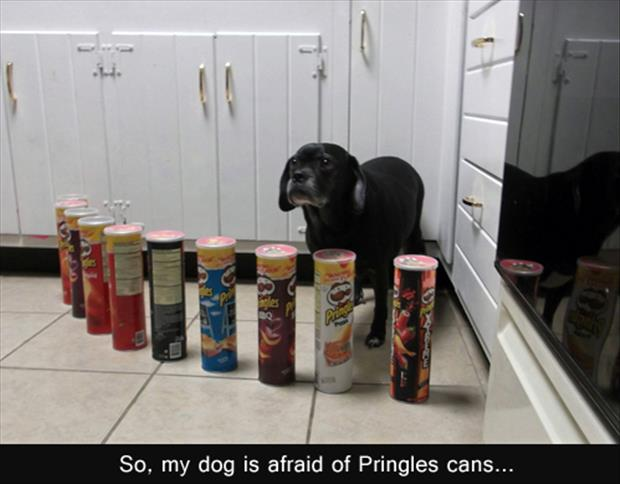 funny dog and pringle cans