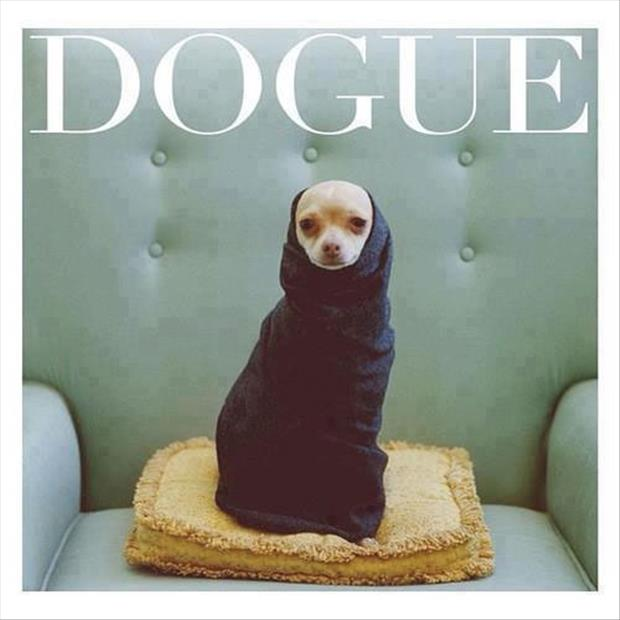 funny dog on magazine cover