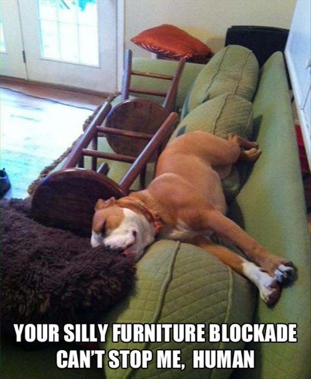 funny dog sleeping on the couch