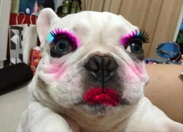 funny dog wearing make up