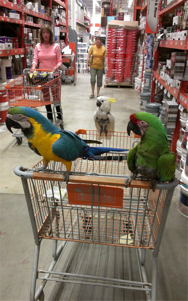 funny home depot pictures (13)