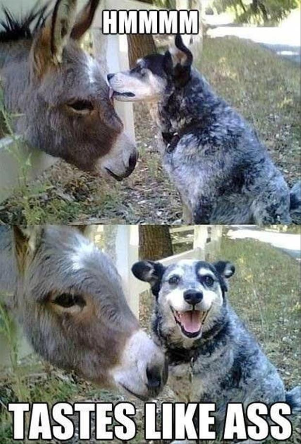 funny image of dog licking a donkey