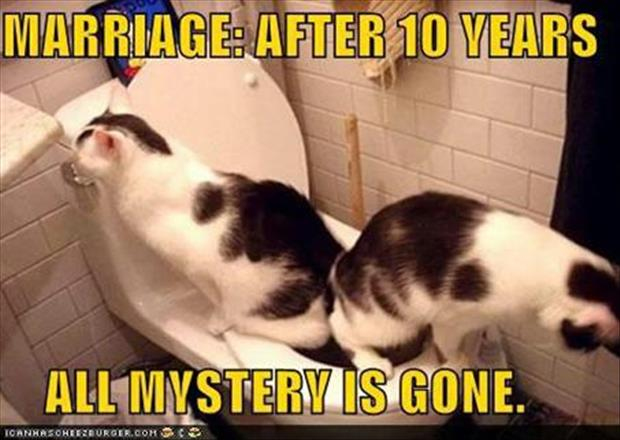 funny marriage pictures