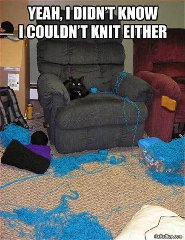 funny pictures cat playing with yarn