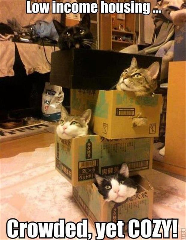funny pictures cats in boxes