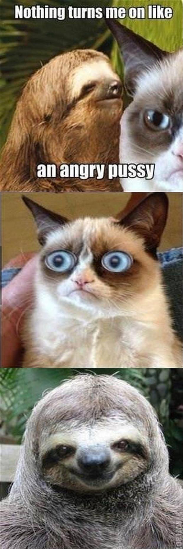 grumpy cat is not turned on