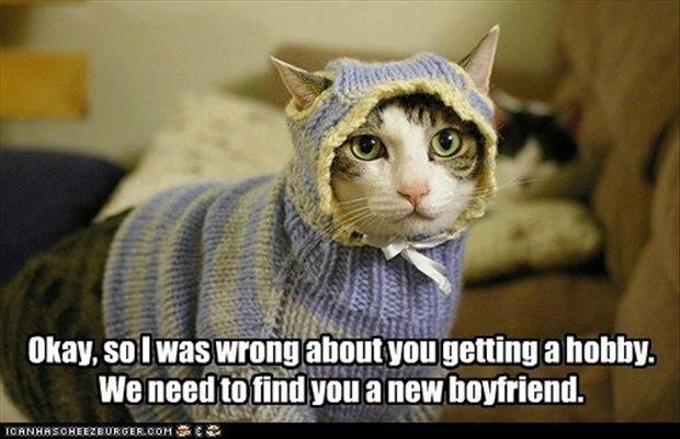 hobby funny cat clothes