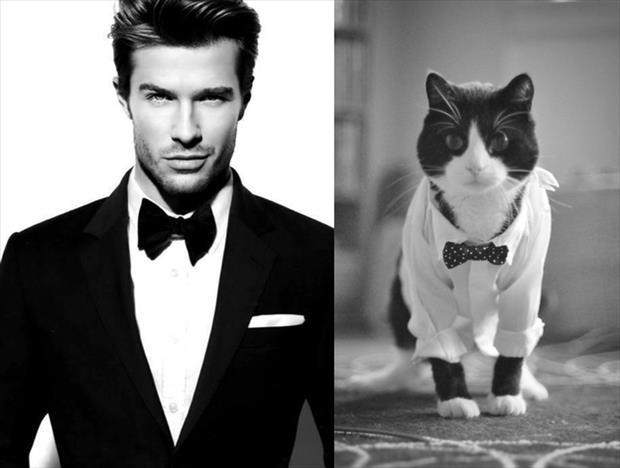 Hot Guys And Their Kitty Counterparts – 12 Pics