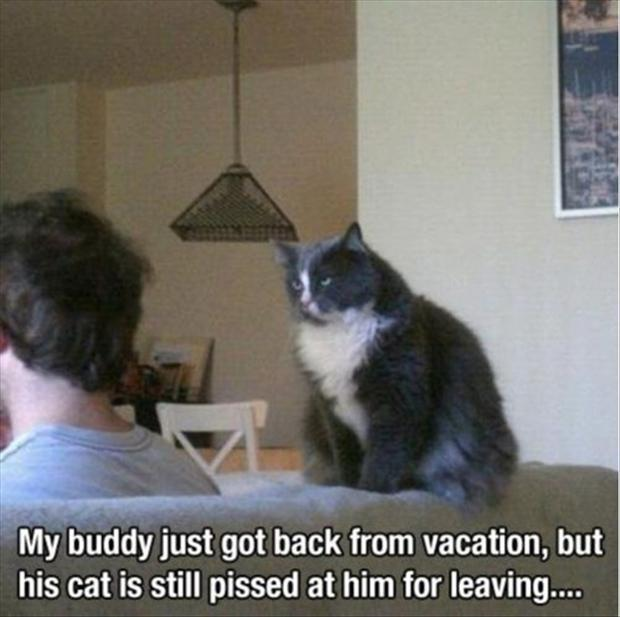 mad cat funny pictures