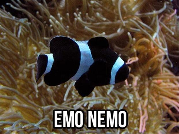 nemo funny pictures