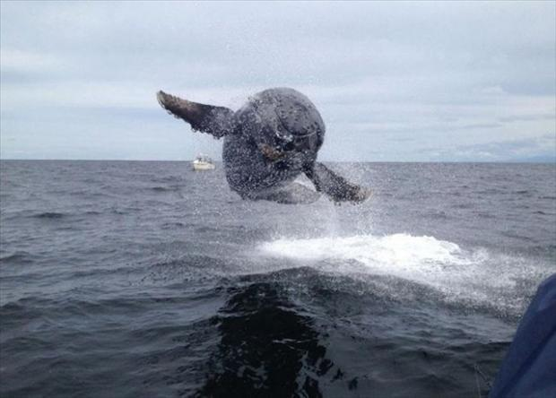 perfectly timed pictures whale