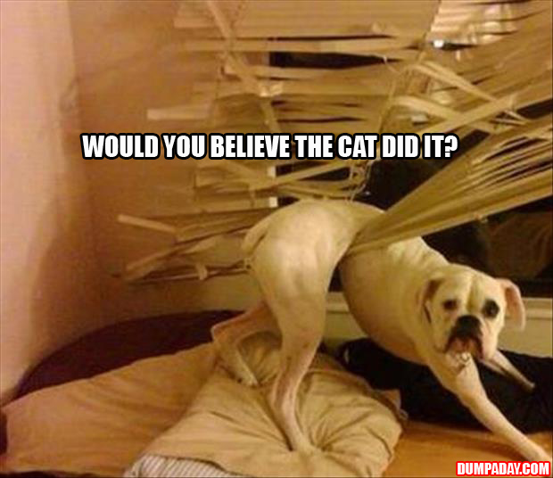 the cats and blinds funny pictures