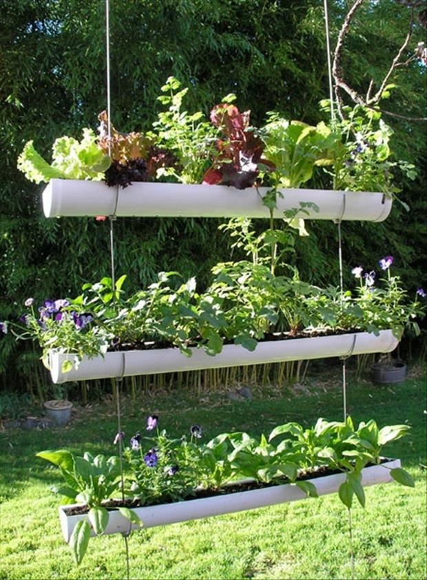 use old rain gutters for planting your garden
