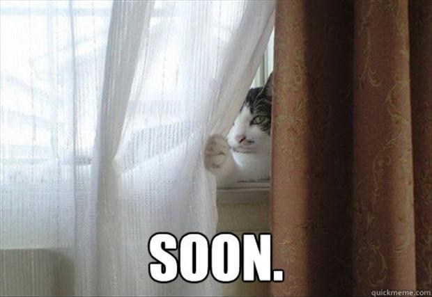 A the cat behind the curtain soon meme