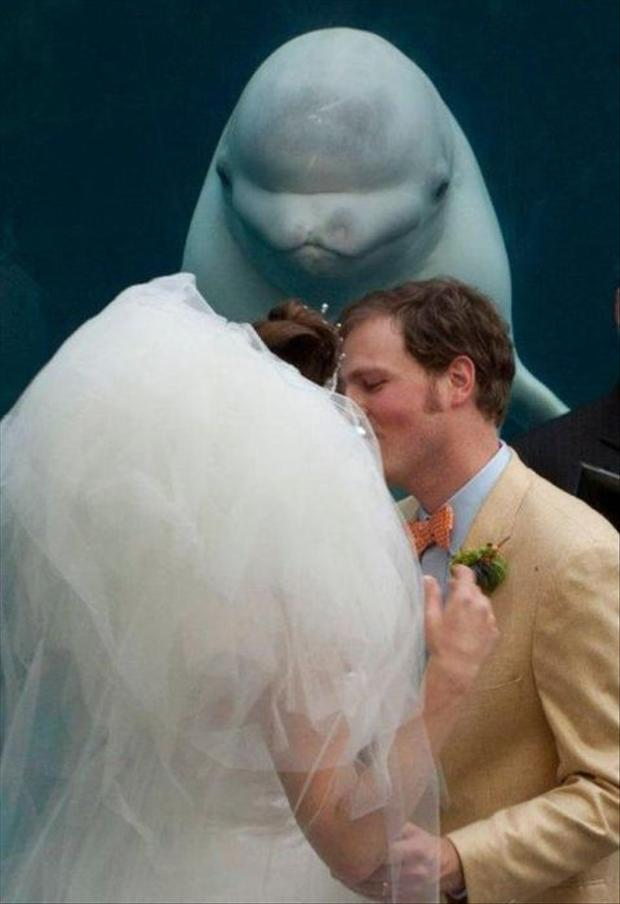 Funny Wedding Photobombs (13)
