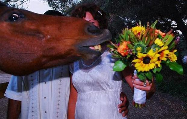 Funny Wedding Photobombs (20)