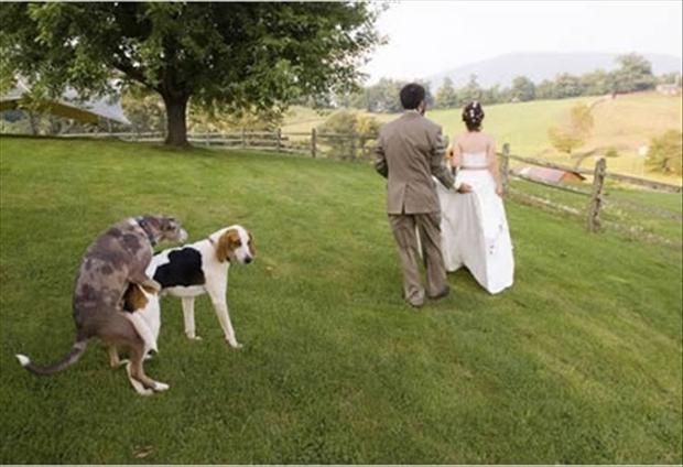 Funny Wedding Photobombs (5)