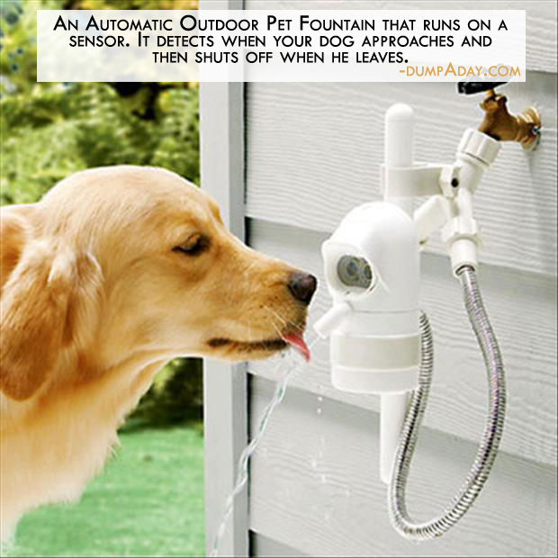 Genius Ideas- Automatic Outdoor Pet Fountain