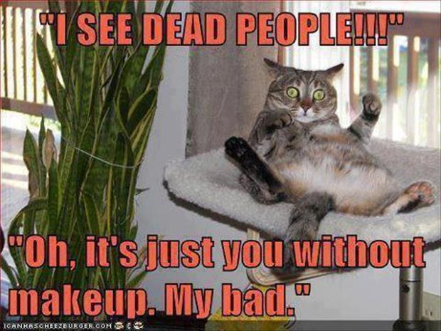 I see dead people, funny cats