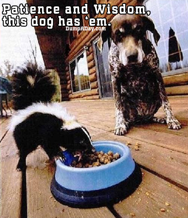 Patience and wisdom, this dog has em'