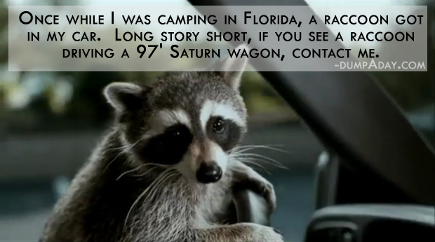 Racoon story