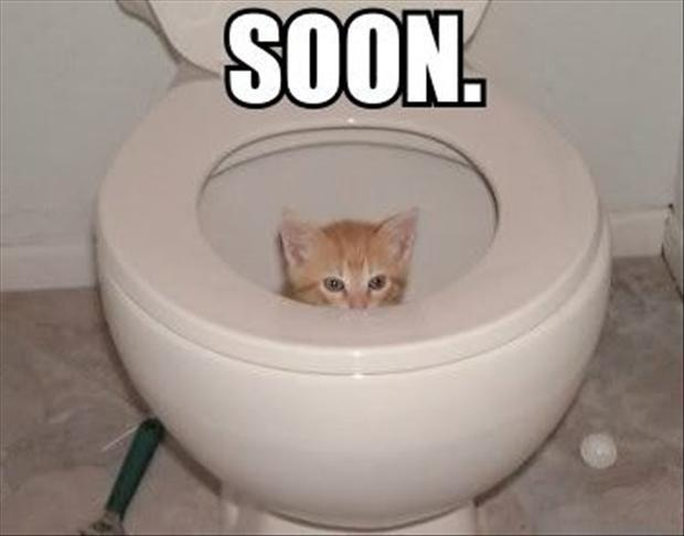 a cat in the toilet soon meme