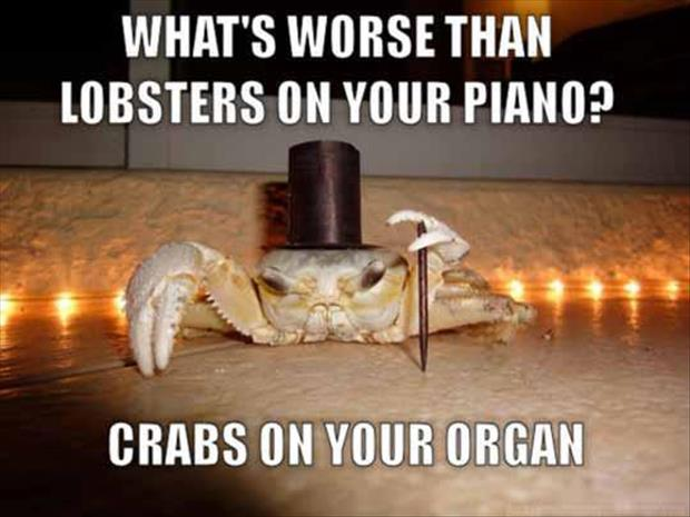 a crabs on your organ