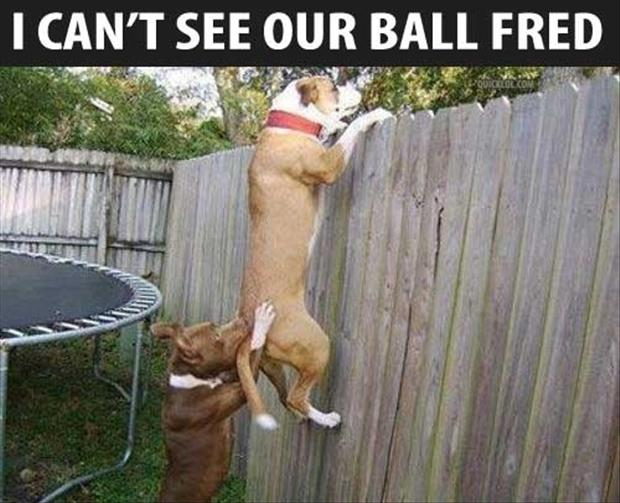 a dog trying to see his balls