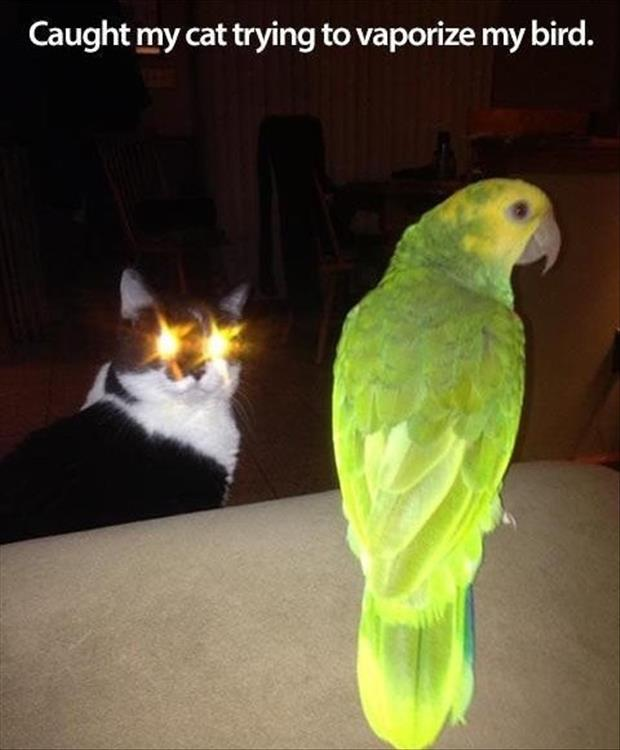 a funny cat laser eyes