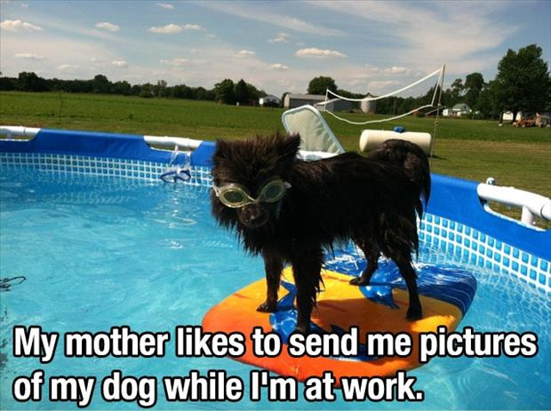 a funny dog in the pool