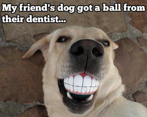 a funny pictures dog with teeth