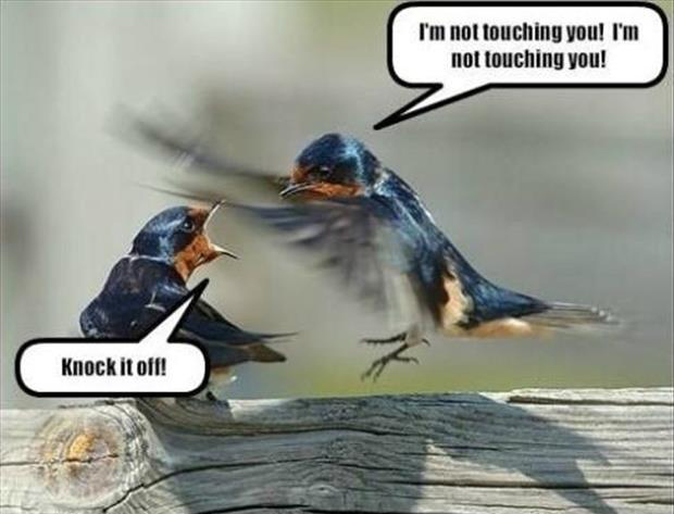 birds fighting funny pictures
