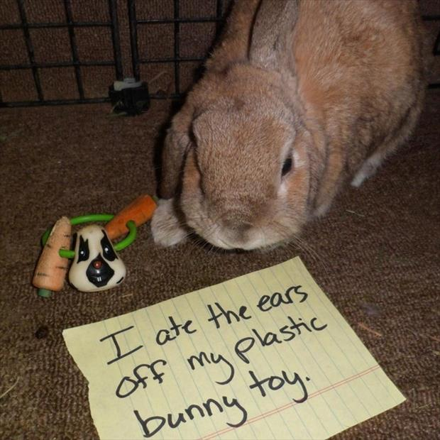 bunny shaming meme (12)