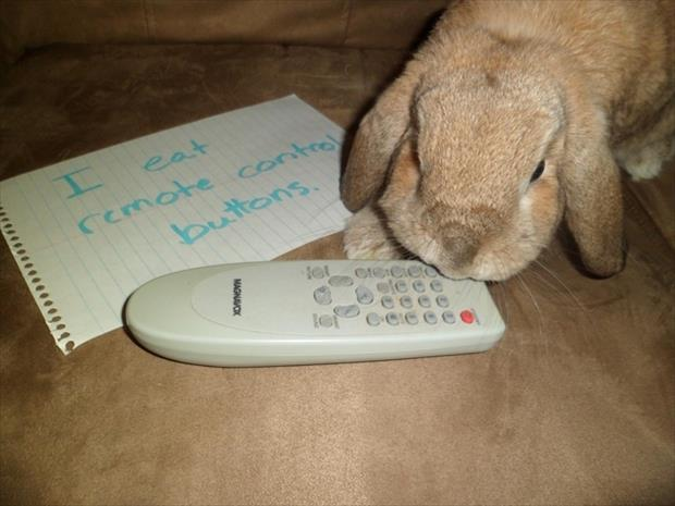 bunny shaming meme (14)