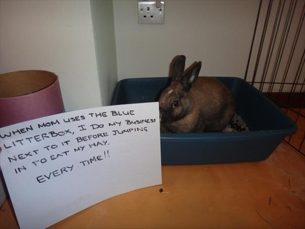 bunny shaming meme (16)